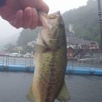 雨の榛名湖ブラックバス釣り